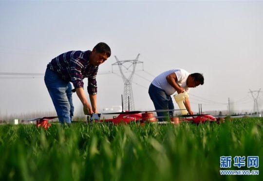 Agricultores chinos preparan sus drones para fumigar sus cultivos en la provincia de Henan, como muestra del desarrollo tecnológico en áreas rurales. (Foto tomada de Radio Internacional de China).